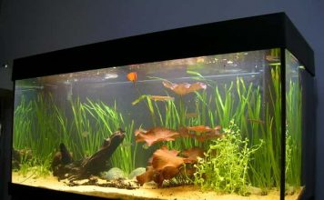 which aquarium lighting