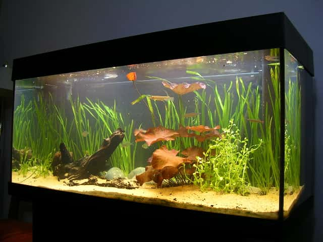Aquarium Lighting Everything You Need To Know Fishkeeping