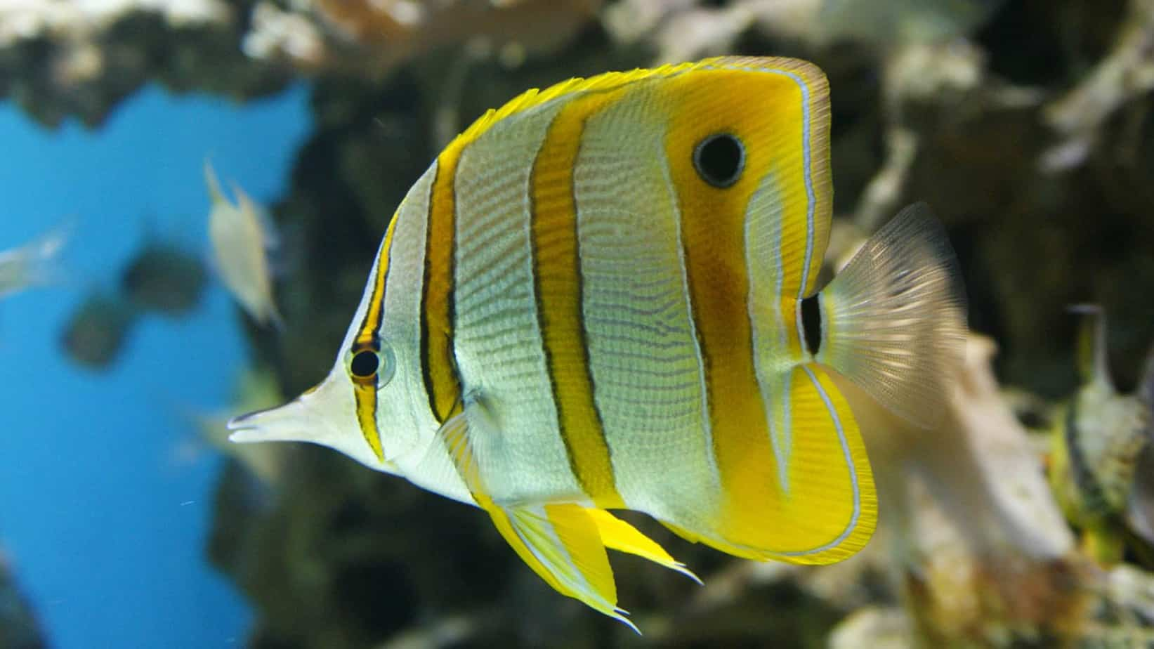 The 10 best saltwater fish for beginners fishkeeping advice for Photos of fish
