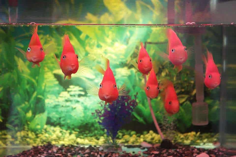 best fish tank for beginner