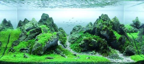 Aquascaping making your aquarium look awesome - Aquascape espana ...