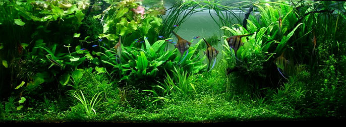 Jungle Style Aquarium