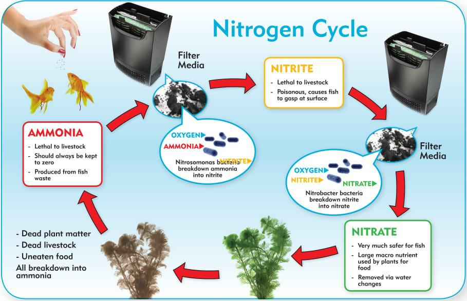 aquarium nitrogen cycle the complete how to guide