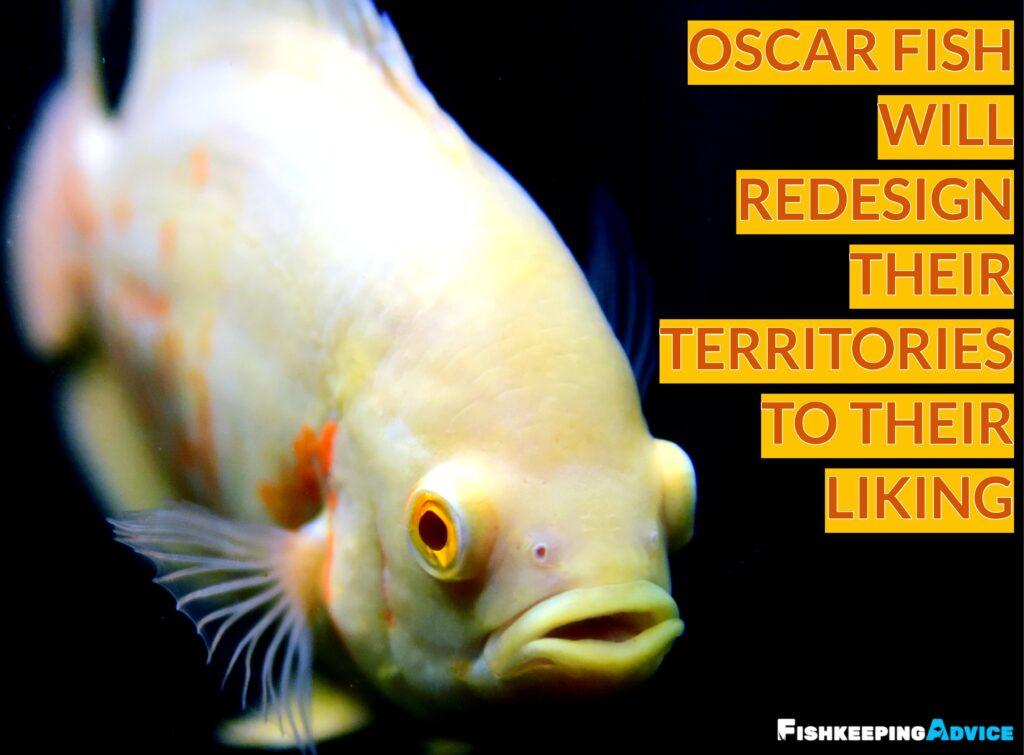 oscar fish tank conditions