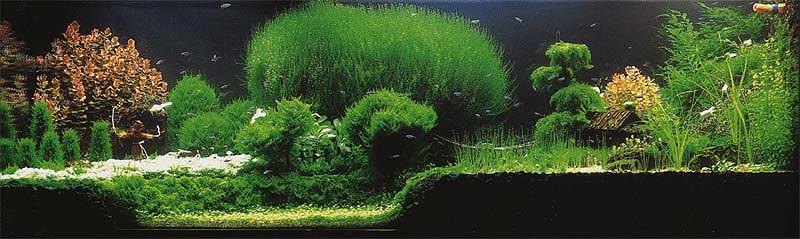 Taiwanese Style Aquarium