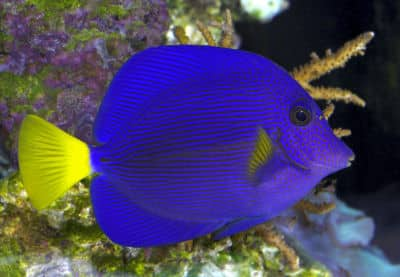 5 best tropical fish for advanced aquarists fishkeeping