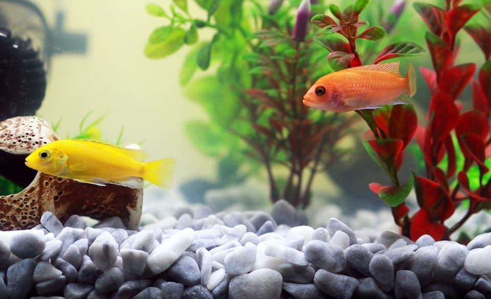 best tank size for beginners? (it\u0027s not what you thinkBest Aquarim Sizes Fresh Water #5