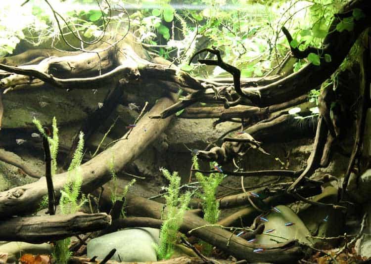 South American River Biotope Aquarium