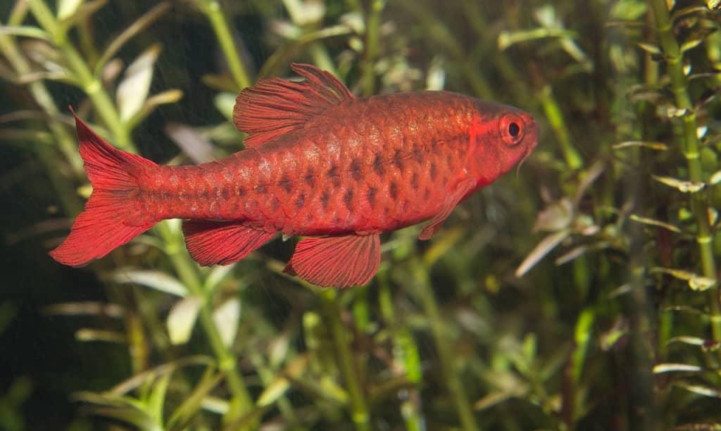 home aquarium fish