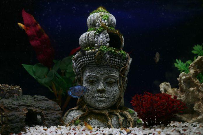unique aquarium decoration