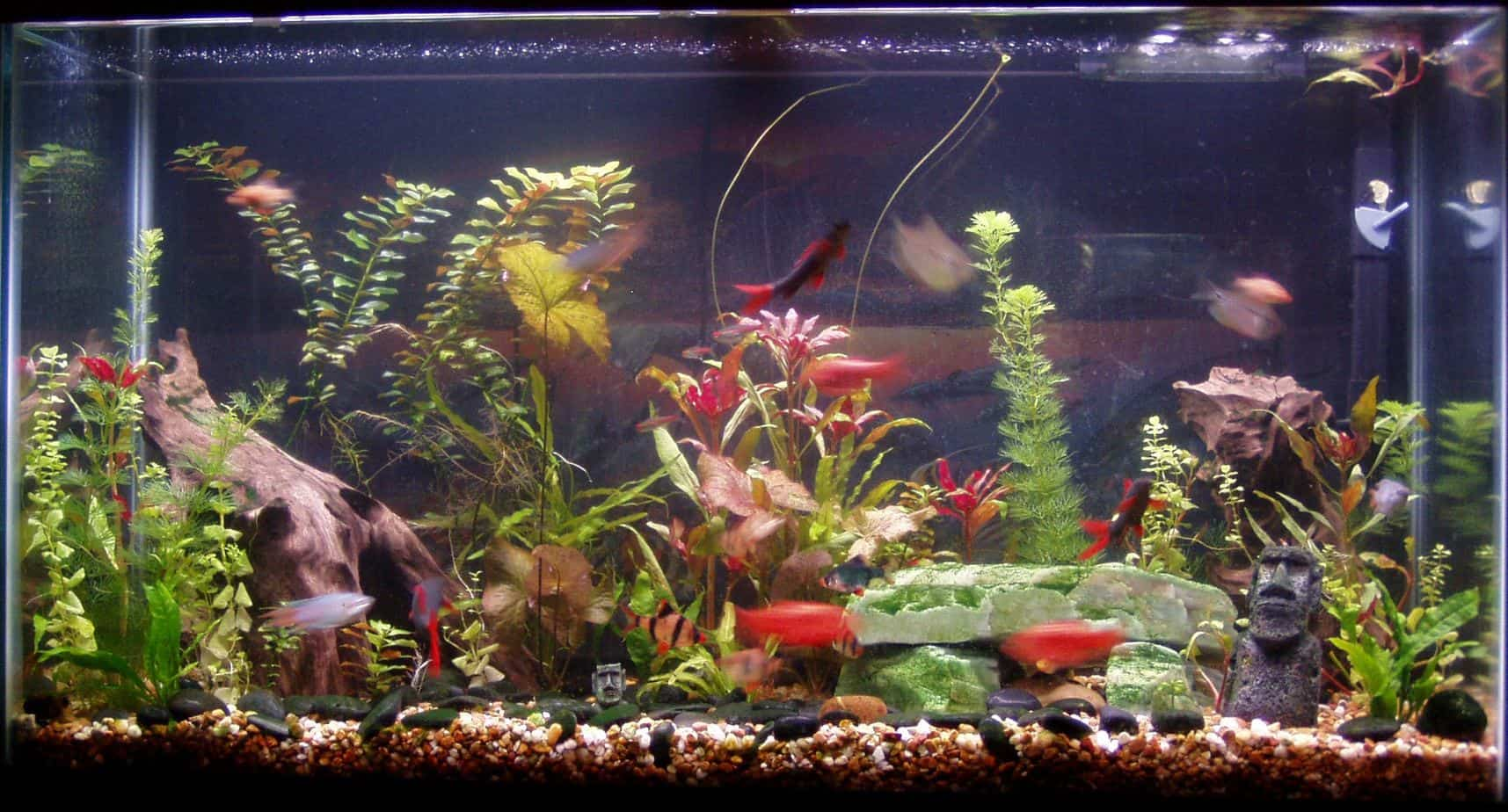 Image gallery home aquarium fish for Spring water for fish tank