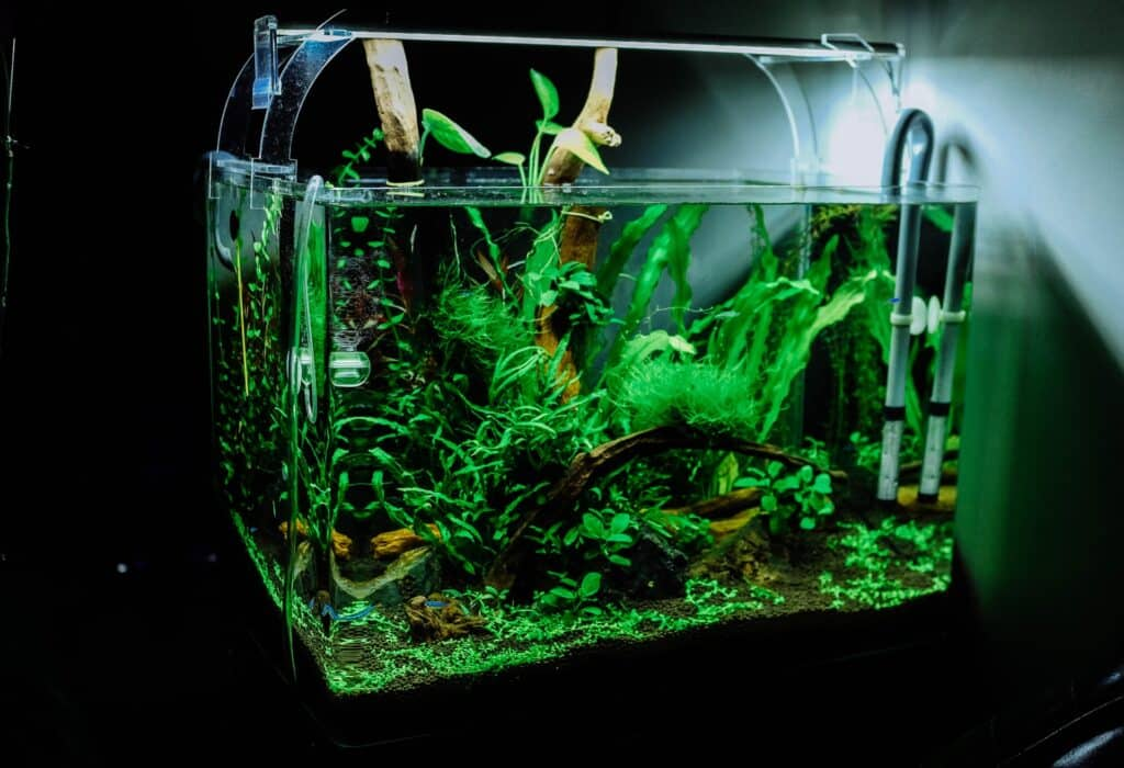 harder to keep aquarium plants