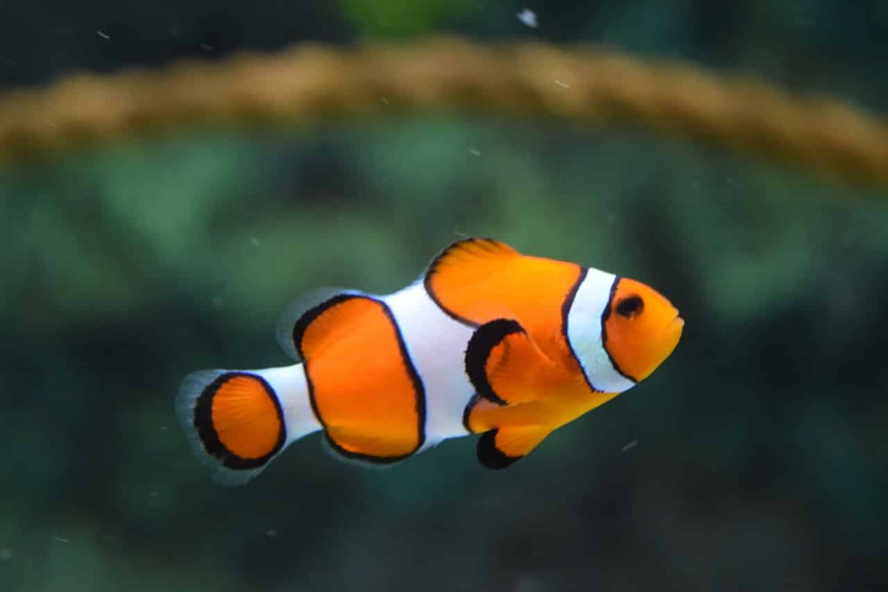 benefits of aquarium