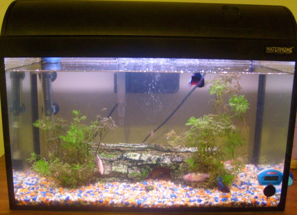 What size tank should I get?