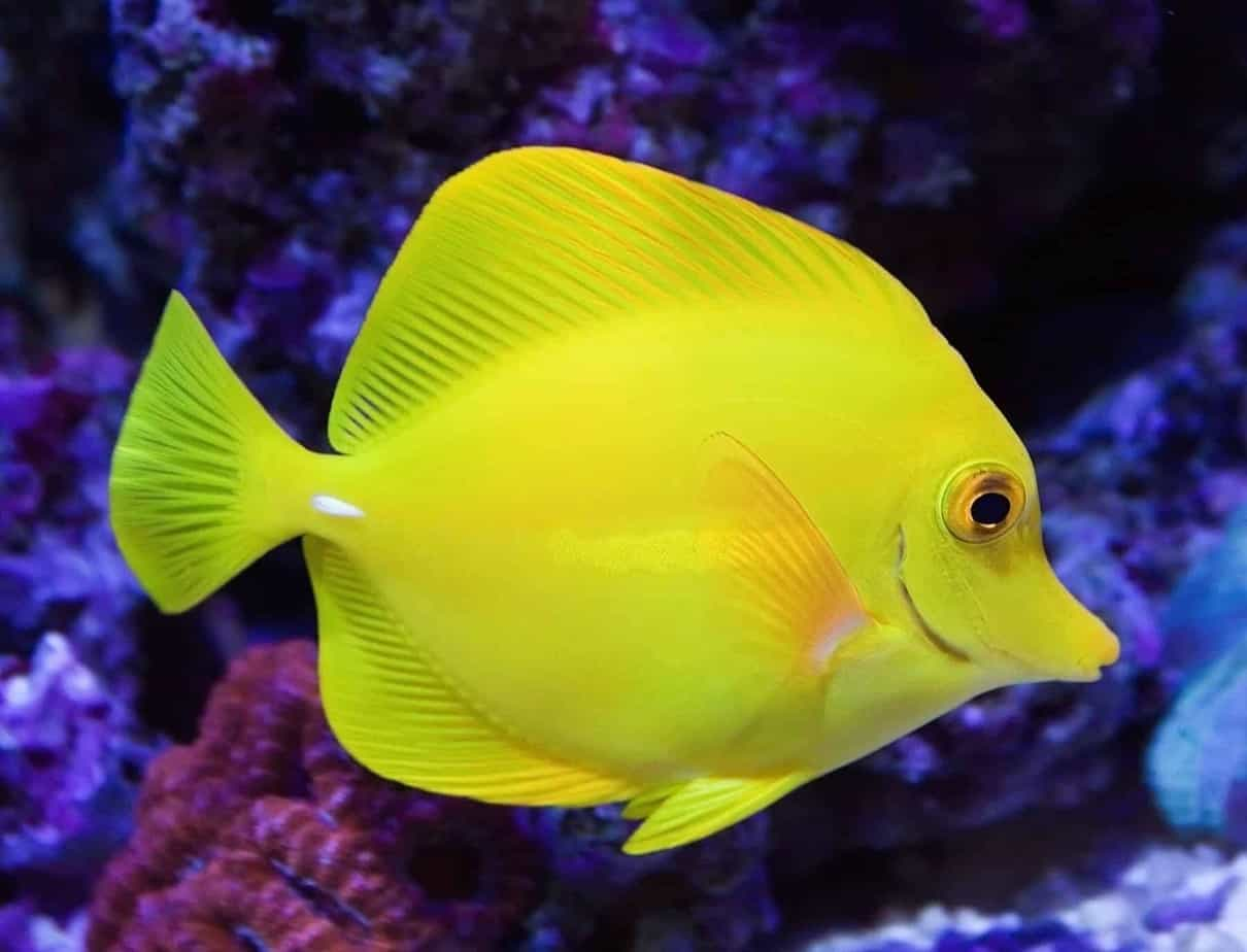 The 10 best saltwater fish for beginners fishkeeping advice for Best beginner fish